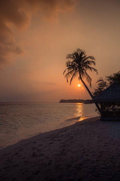 Maldives 6 sur Andy Troy