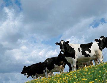 Koeien op een dijk sur Rene van der Meer