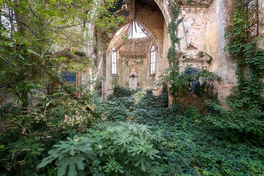 Verlaten Kerk Overgenomen door Planten. van Roman Robroek