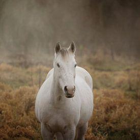 Paard in mist van Christa van Gend