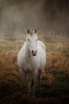 Paard in mist van