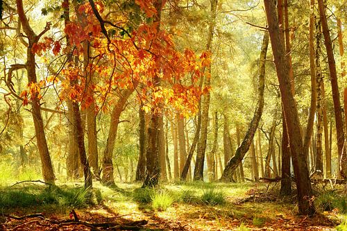 Atmospheric scene in the forest on a sunny day in autumn.