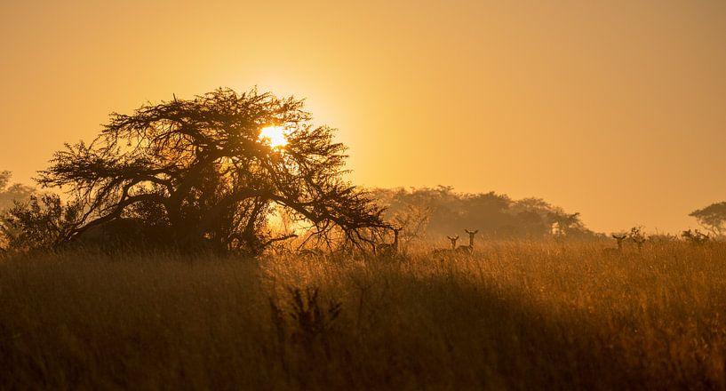 Savannah Sunrise van Claudia van Zanten