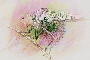 Libelle von Burkhard Kohnert