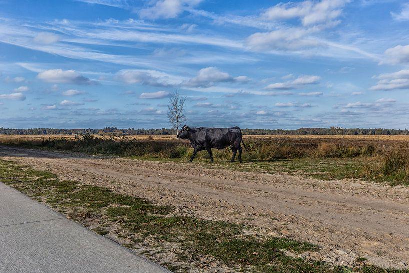 Kühe von Annette van Dijk-Leek
