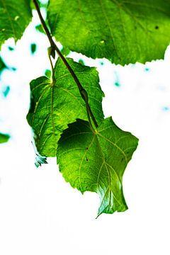 Reines Grün von Christian Kwa
