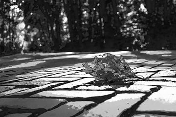 Zwart wit blad