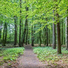 Pad door een rustig bos met jonge bladeren van Joost Adriaanse