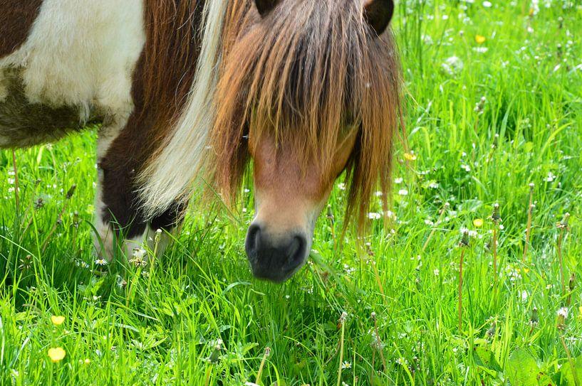 Pony auf der Weide von Susanne Seidel