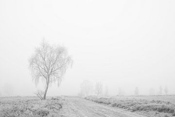 Ein nebliger Morgen von Barbara Brolsma