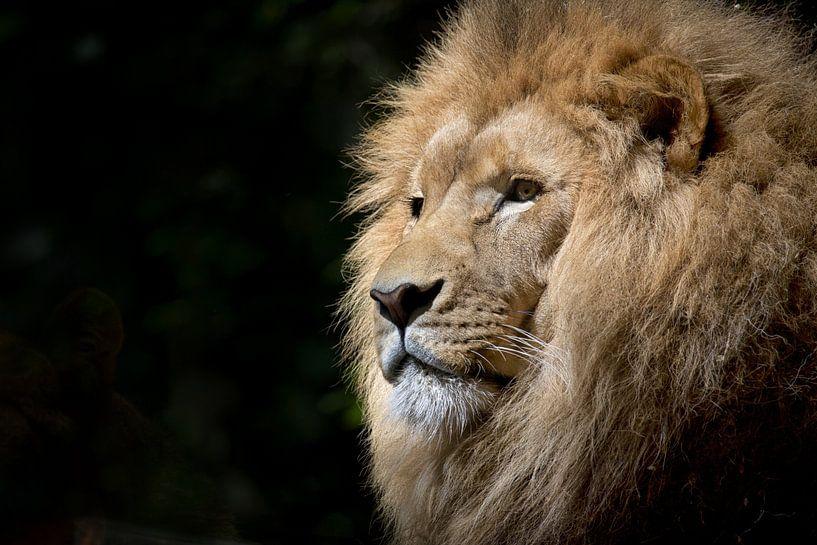 close-up van een leeuwenkop van Atelier Liesjes