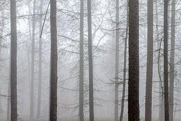 Mistige silhouetten in het bos van
