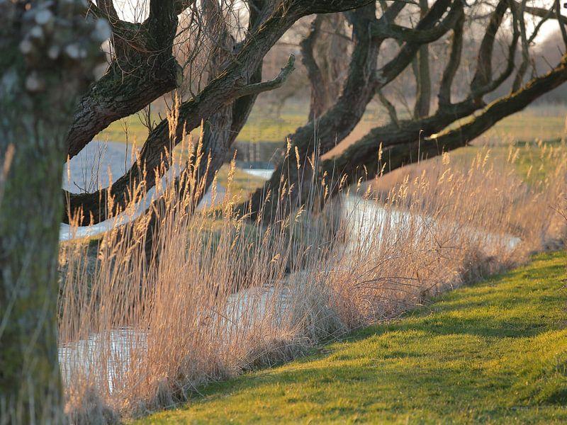 Sloot met riet en overhangende boomtakken in de avondzon van Ronald Smits