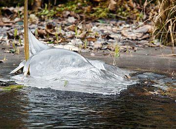 'Dolfijn van bevroren water' van Erna Kampman