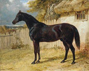 Black Horse van Antonije Lazovic