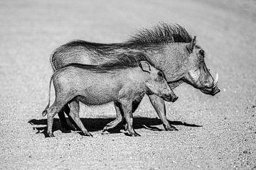 So werde ich sein - Wildschwein. von Sharing Wildlife