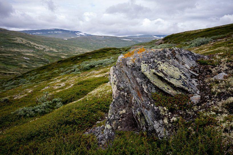 Noorse hoogvlakte  van mr gorpie