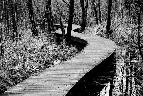 Zagzag door de bossen in Brabant | Nederland