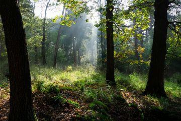 Mistige herfstmiddag in het bos in Groesbeek van Maja Artwork
