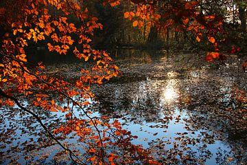 pond with autumnal branches van Susanne Bauernfeind