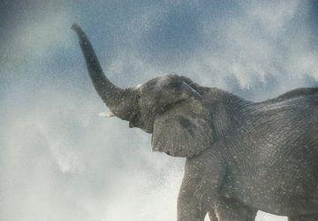 Elefant von Marcel van Balken