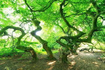 Süntel-beuk met groene boomtoppen