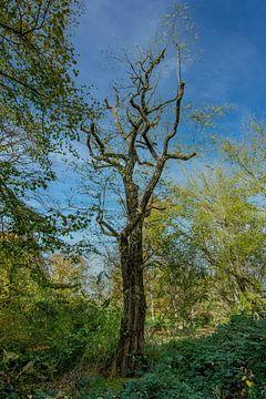 Alter Baum von Johnny Flash