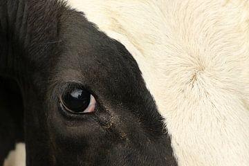Kuh in Nahaufnahme von Christel Smits