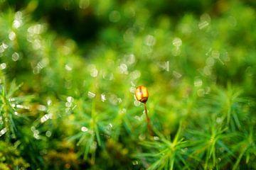 Groei - van dichtbij in het bos van ViLa