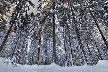 Hiver dans la forêt sur Eus Driessen