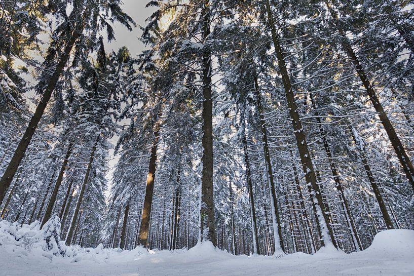 Winter in het bos van Eus Driessen