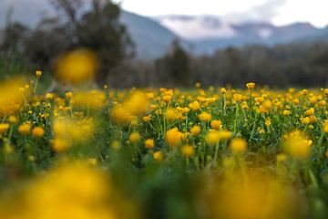 Spring van Paul Wilson