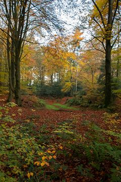 Herfst in het bos van Gert Hilbink