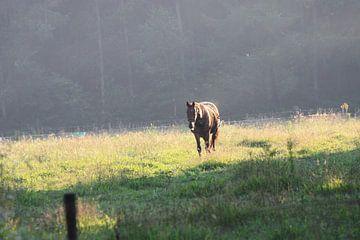 Pferd auf der Weide mit regen Nebel von M Ravensbergen