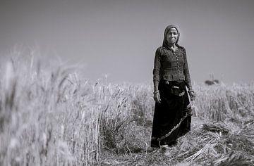 A woman harvesting crops van