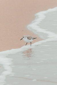 Vogel in de kustlijn | Scheveningse kust