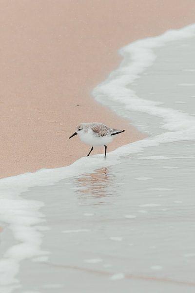 Vogel in de kustlijn | Scheveningse kust van Dylan gaat naar buiten