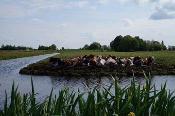 Kühe auf der Wiese von Martine Overkamp-Hovenga