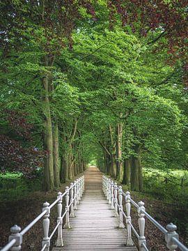Brücke zwischen den Bäumen von Jeroen Luyckx