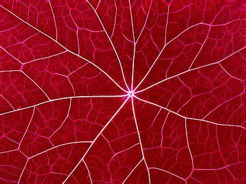 Nerveus Rood van Caroline Lichthart