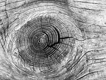Pinsel in Holz (Pinsel in schwarz und weiß) von Caroline Lichthart