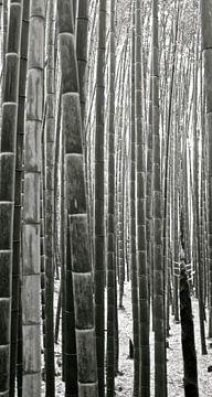 'Bamboebos', Kyoto- Japan van