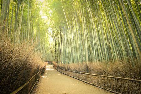 Bamboo Forest, Japan von Robert van Hall