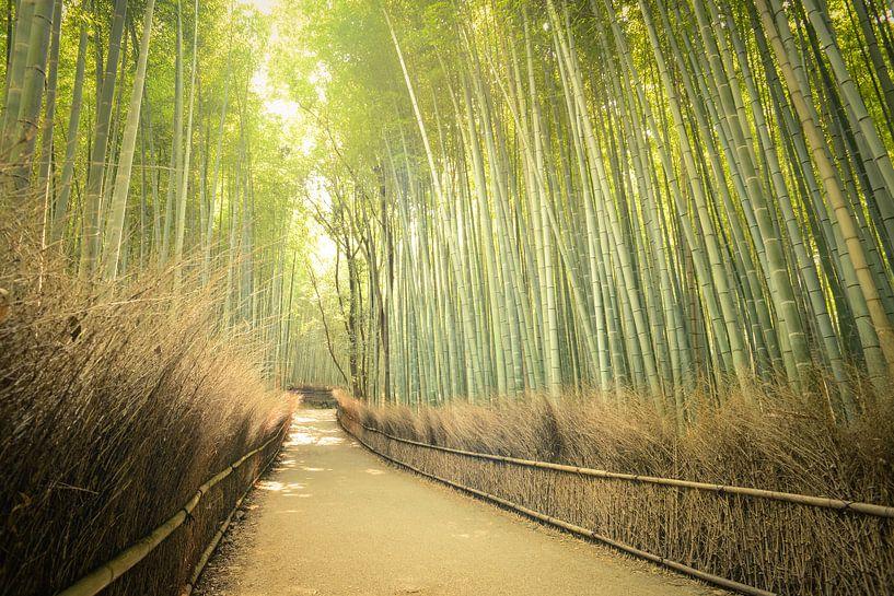 Bamboo Forest,  Kyoto, Japan van Robert van Hall