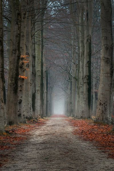 Mistery lane van Patrick Rodink