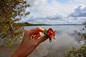 Zomer in Fins lapland van My Footprints