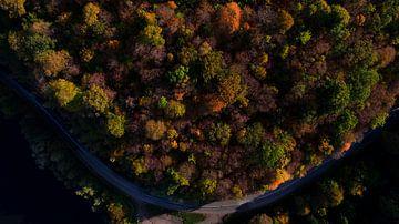 Luchtfoto kleurrijk bos met weg van Kelvin Middelink