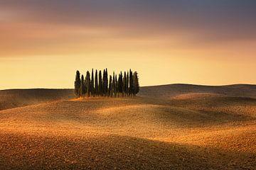 Zypressen auf einem weitem Feld in der Toskana in Italien. Typisch puristische Landschaft / Hügellan von Fine Art Fotografie