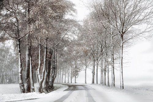 Winterlandschap met sneeuw