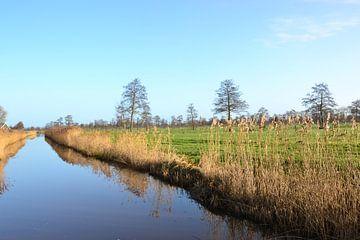 Uitzicht over riviertje, de Doezumertocht van Mark van der Werf